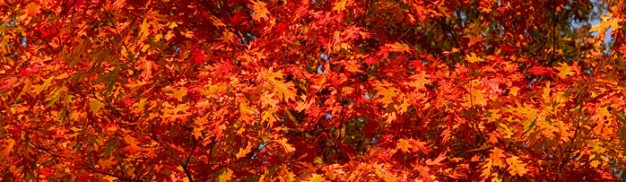 76_fall_foliage_leaves